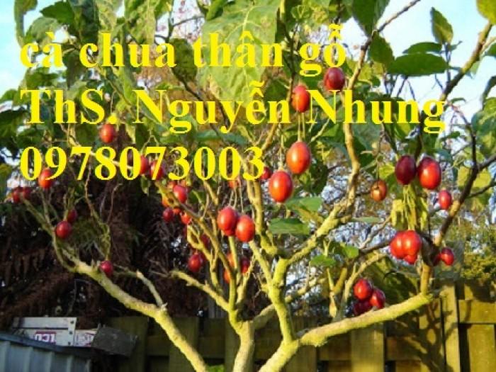 Cung cấp giống cây cà chua thân gỗ chất lượng cao8
