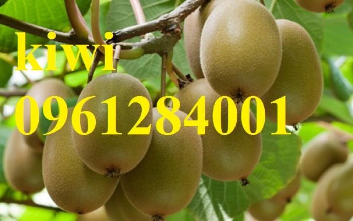 Cung cấp giống cây kiwi, kiwi vàng, kiwi xanh, cây giống nhập khẩu chất lượng cao11