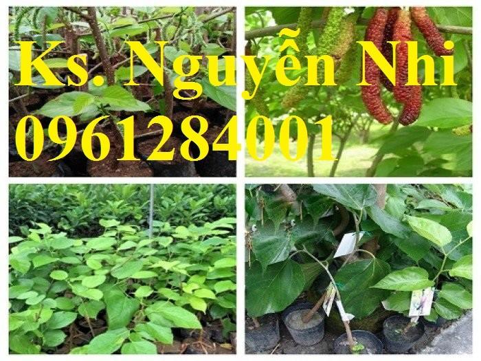 Chuyên cung cấp cây giống dâu quả dài, dâu quả dài đài loan, cây giống nhập chất lượng cao6