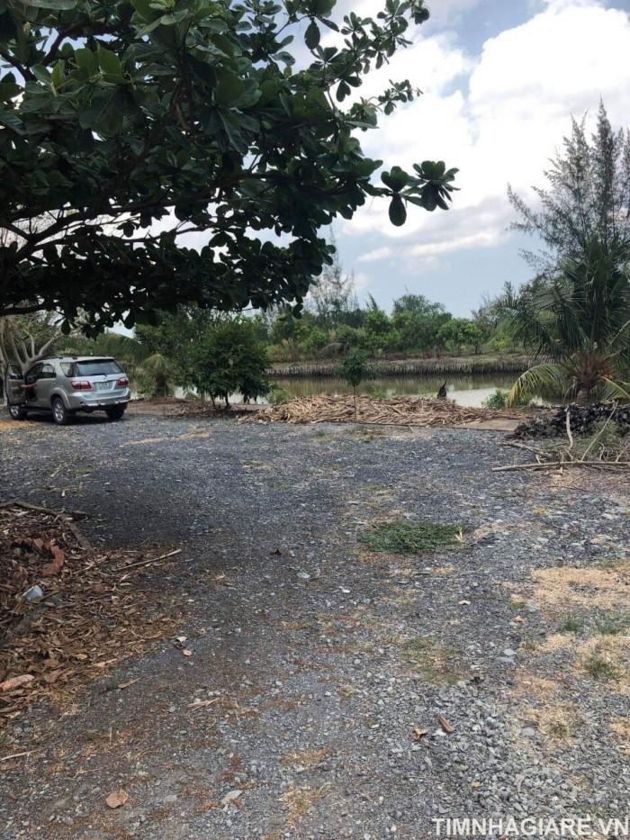 Bán 8500m2 đất tại xã Lý Nhơn, Huyện Cần Giờ, có nhà yến, đang có thu nhập, có vườn cây ăn trái, ao cá