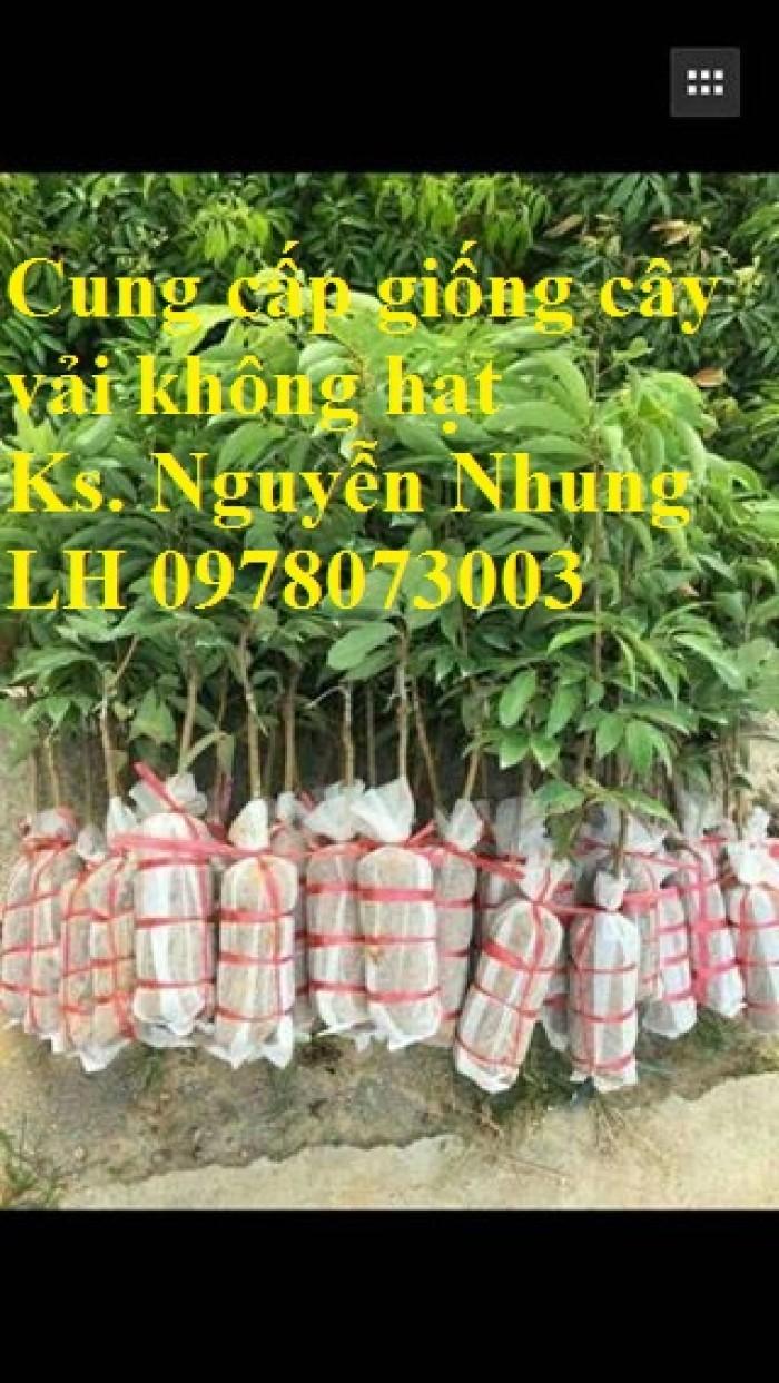 Giống cây vải không hạt uy tín chất lượng, số lượng lớn, giao hàng toàn quốc14
