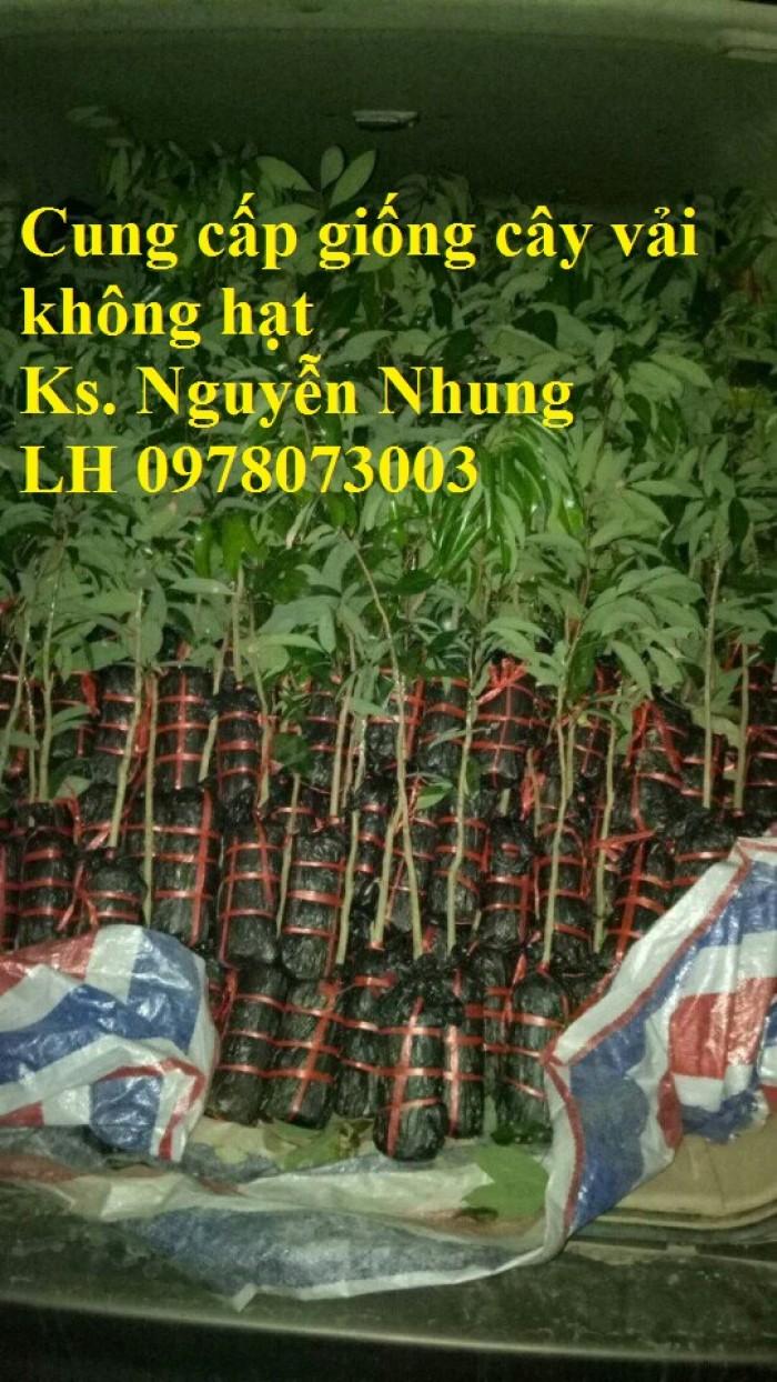 [4] Giống cây vải không hạt uy tín chất lượng, số lượng lớn, giao hàng toàn quốc