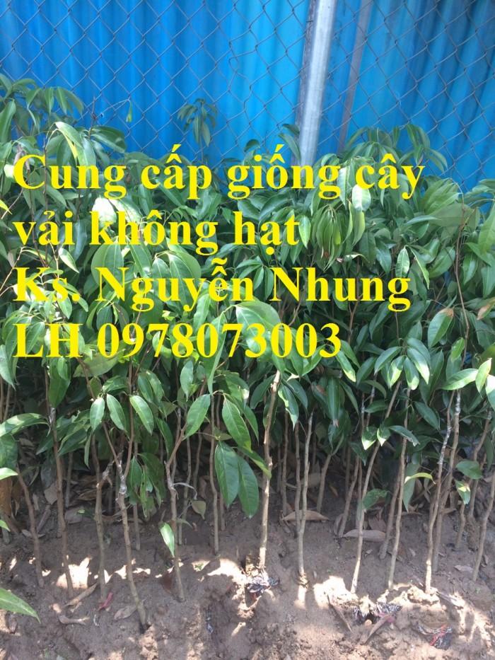 [2] Giống cây vải không hạt uy tín chất lượng, số lượng lớn, giao hàng toàn quốc