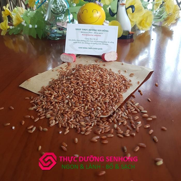 Gạo lứt đỏ 6 tháng hữu cơ, không thuốc trừ sâu, không phân hóa học, không phẩm màu, không chất bảo quản2