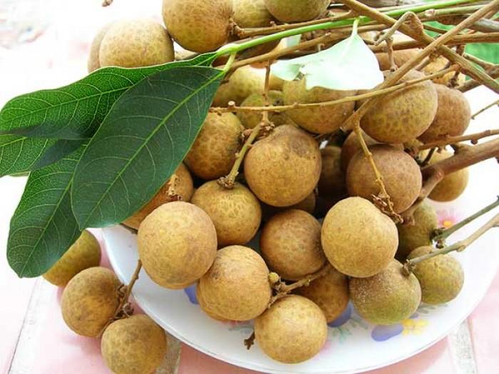 Giống nhãn hương chi, nhãn lồng hưng yên, cây giống chuẩn, cam kêt chất lượng đến khi cây ra trái.1
