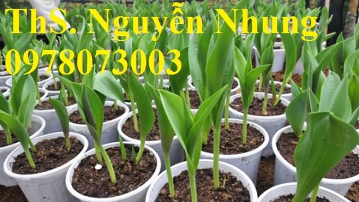 CỦ GIỐNG HOA TUYLIP - Viện cây giống Trung ương chuyên cung cấp củ giấo hoa Tuylip chất lượng cao6