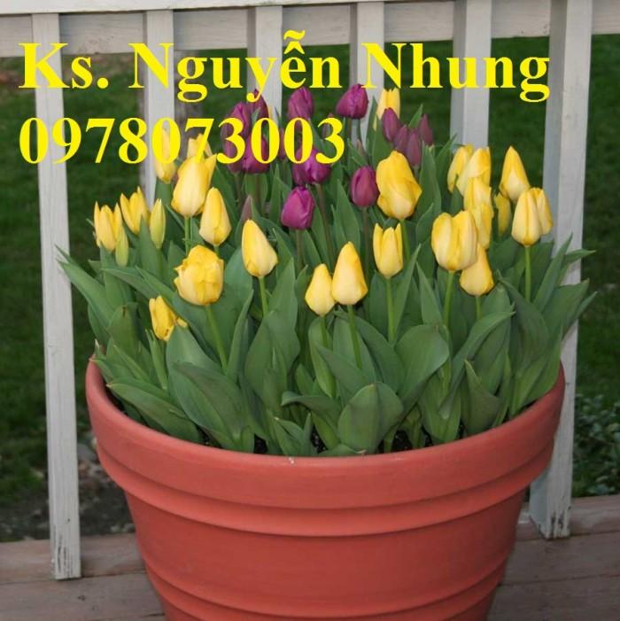 CỦ GIỐNG HOA TUYLIP - Viện cây giống Trung ương chuyên cung cấp củ giấo hoa Tuylip chất lượng cao0