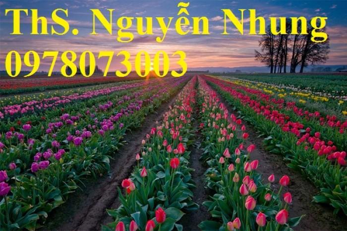 CỦ GIỐNG HOA TUYLIP - Viện cây giống Trung ương chuyên cung cấp củ giấo hoa Tuylip chất lượng cao3