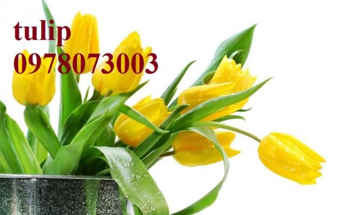 CỦ GIỐNG HOA TUYLIP - Viện cây giống Trung ương chuyên cung cấp củ giấo hoa Tuylip chất lượng cao4