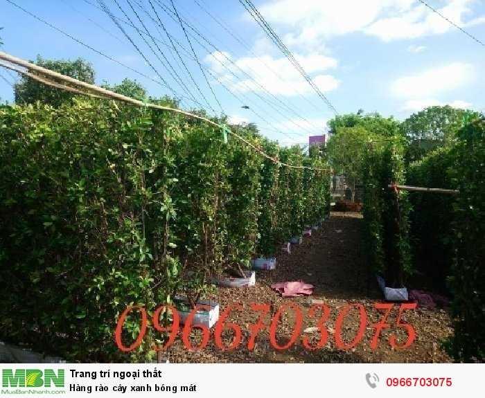 Hàng rào cây xanh bóng mát1