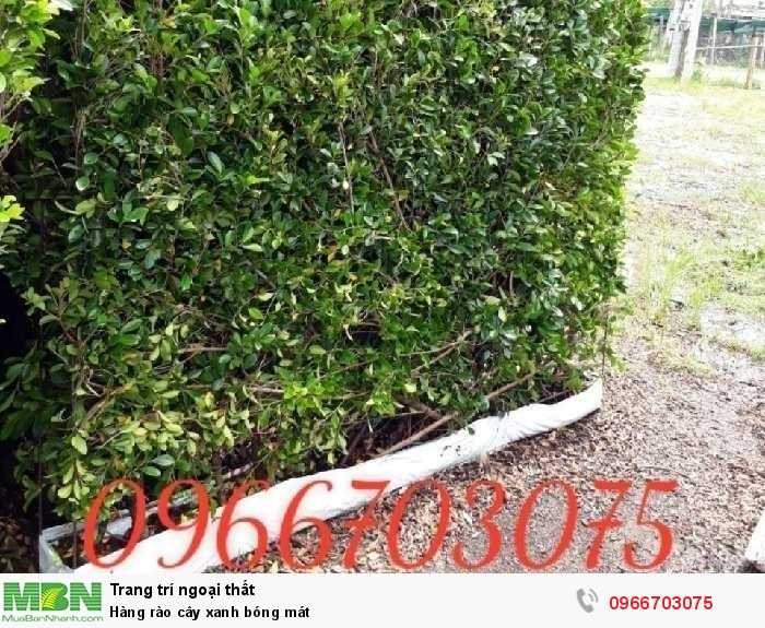 Hàng rào cây xanh bóng mát2