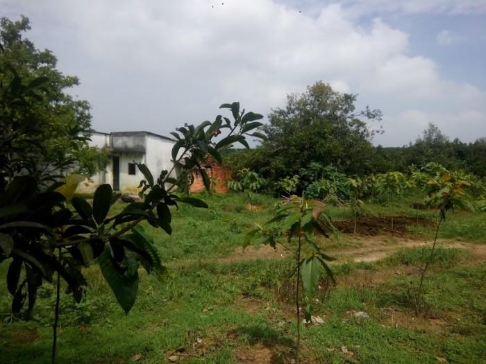 Sang trang trại 43799 m2 tại Ấp 2, xã An Viễn, Trảng Bom