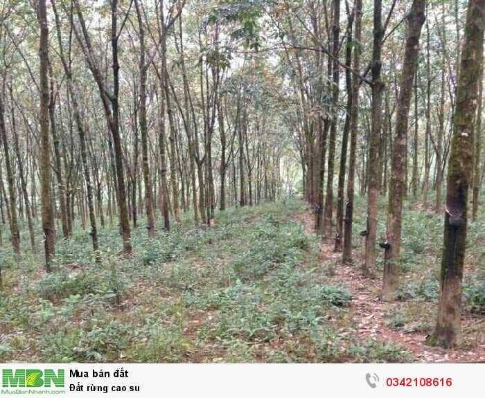 Đất rừng cao su