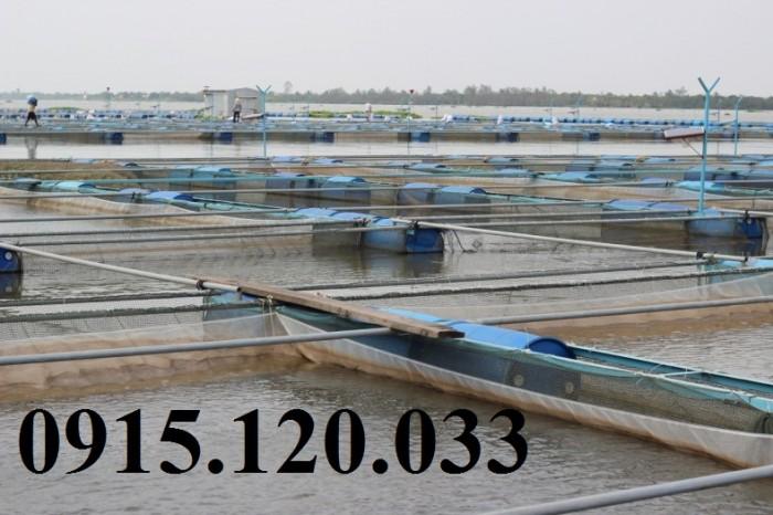 Lồng nuôi cá tra, cá ba sa đồng bằng sông Cửu Long4