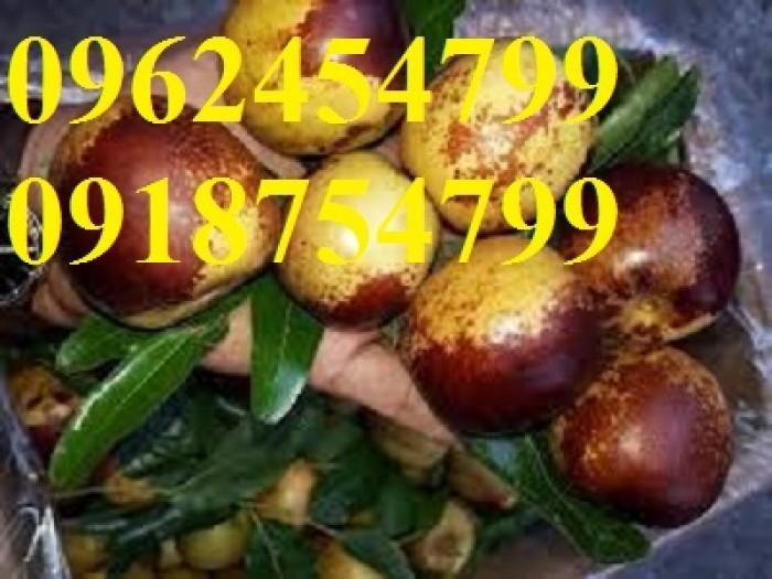 Bán giống cây hồng táo, cây táo tàu trung quốc, cây táo tầu làm thuốc, giao cây toàn quốc, lh 0962454799//09187547999