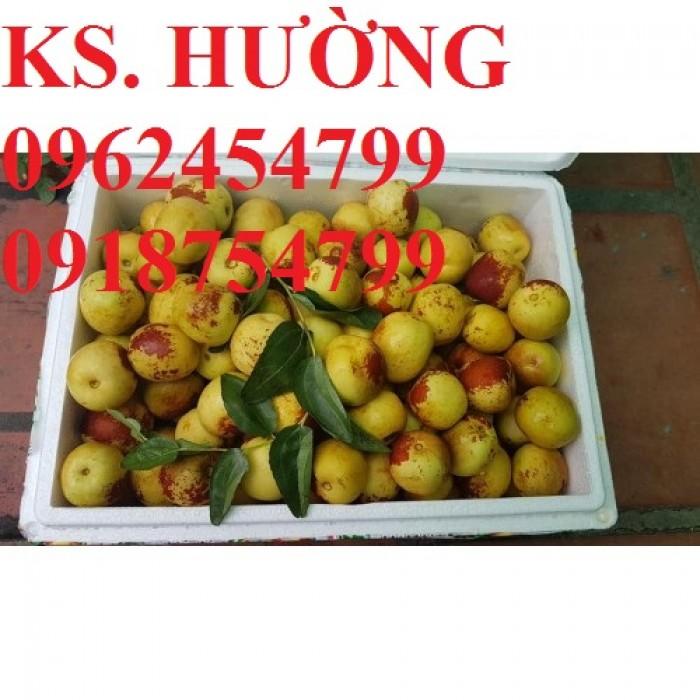 Bán giống cây hồng táo, cây táo tàu trung quốc, cây táo tầu làm thuốc, giao cây toàn quốc, lh 0962454799//09187547993