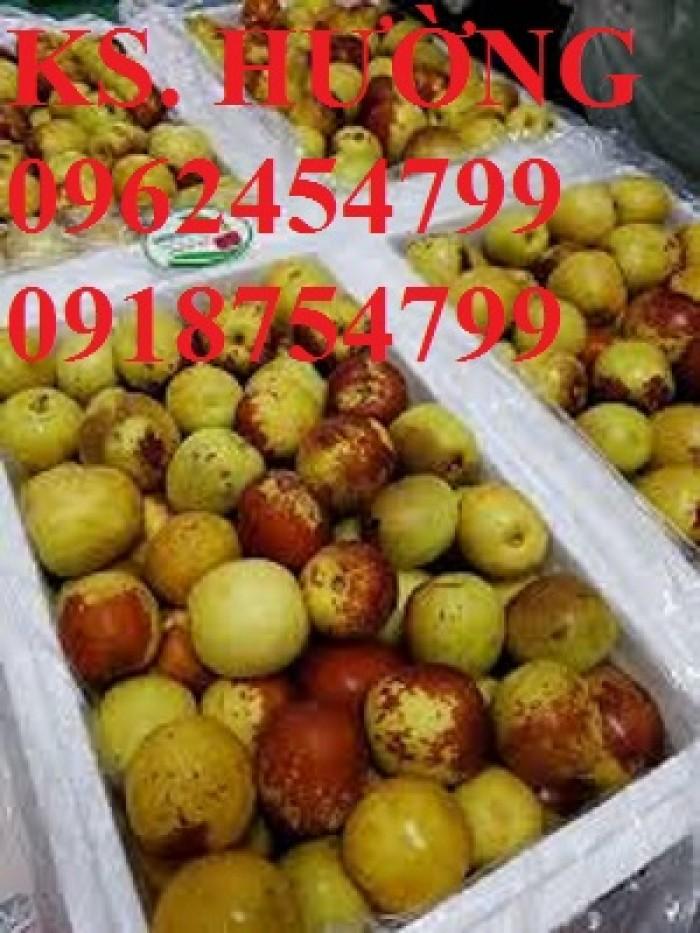 Bán giống cây hồng táo, cây táo tàu trung quốc, cây táo tầu làm thuốc, giao cây toàn quốc, lh 0962454799//09187547992