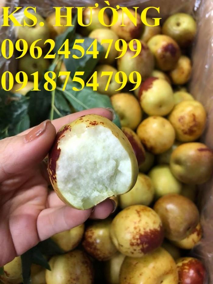 Bán giống cây hồng táo, cây táo tàu trung quốc, cây táo tầu làm thuốc, giao cây toàn quốc, lh 0962454799//09187547991