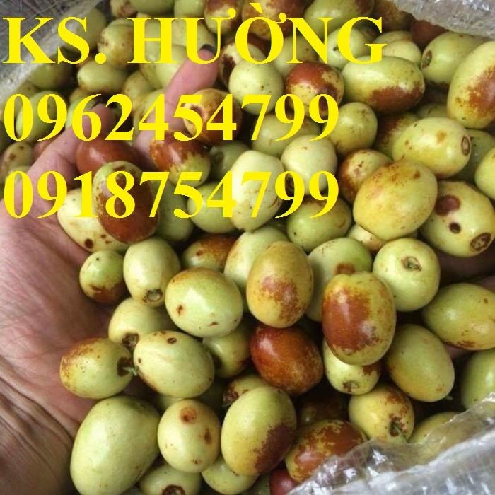 Bán giống cây hồng táo, cây táo tàu trung quốc, cây táo tầu làm thuốc, giao cây toàn quốc, lh 0962454799//09187547994