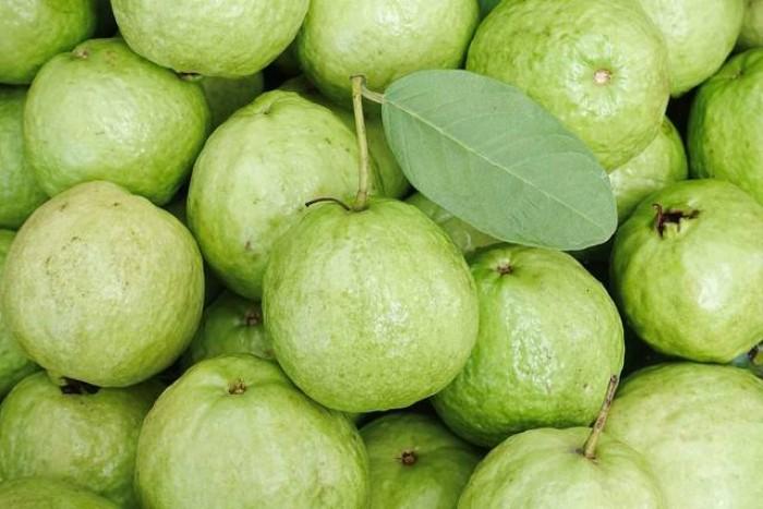 Giống cây ổi không hạt ruột trắng ăn ngon thơm. cung cấp cây giống toàn quốc5