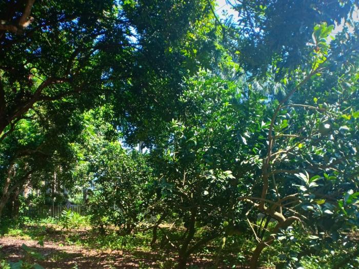 Bán đất Thổ cư tại Lương Sơn Hòa Bình giao thông thuận lợi, mặt tiền lớn