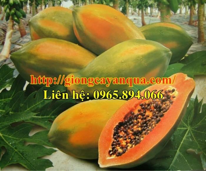 Cung cấp giống đu đủ lùn Thái Lan, đủ đủ lùn F1, đủ đủ F1 Thái Lan - Đại học Nông nghiệp 19
