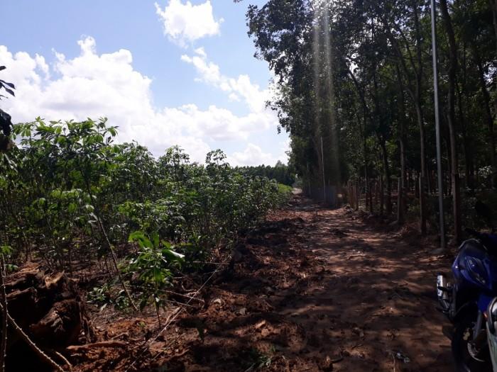 Chính chủ bán lô đất sau ủy ban Tân Hiệp, Long Thành, 9500m2 có 200m2 thổ cư.