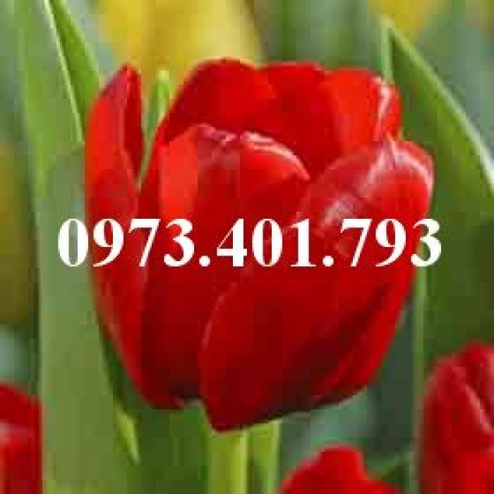 Cây hoa tulip màu đỏ cờ0