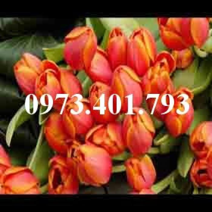 Cây hoa tulip màu cam0