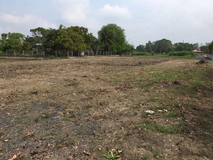 Chính chủ cần bán miếng đất Bình Chánh diện tích 1638.5m2 có 300m2 TC