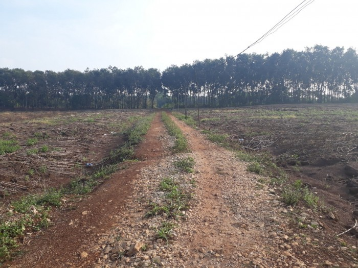 Chính chủ cần tiền Bán gấp lô đất sổ đỏ ở Bàu Cạn, Long Thành, 9009 m2 – 300m2 thổ cư