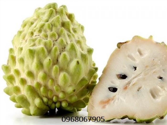 Bán giống cây Na Bở Đài Loan chuẩn giống nhập khẩu7