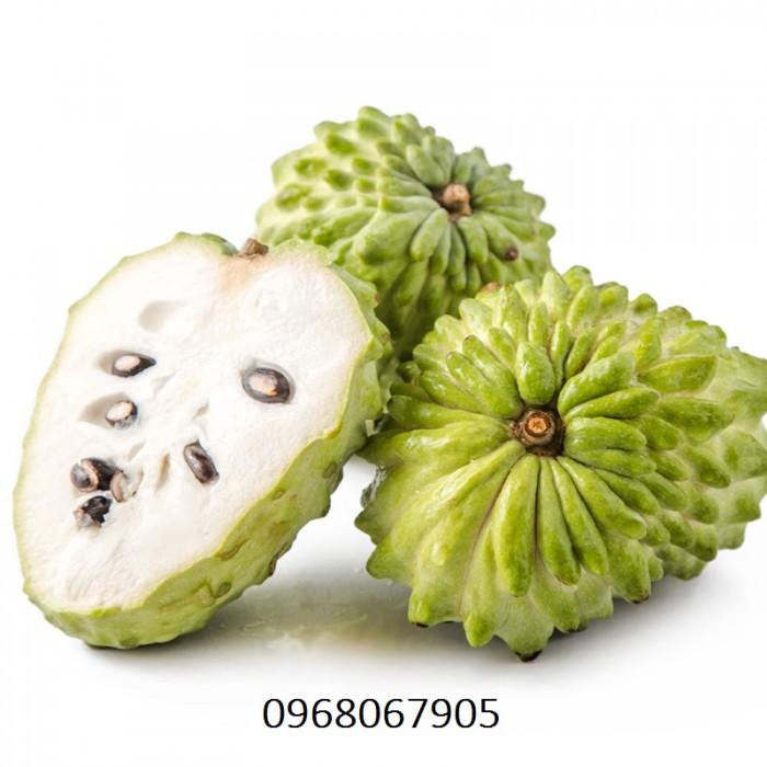 Bán giống cây Na Bở Đài Loan chuẩn giống nhập khẩu6