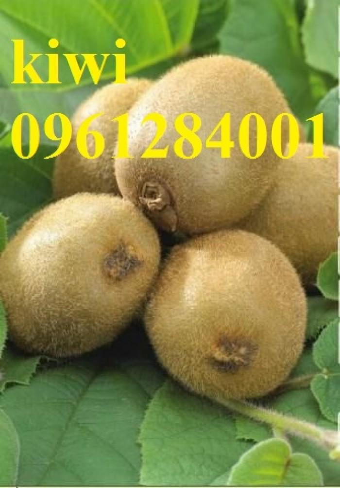 Bán cây giống kiwi, kiwi ruột xanh, kiwi ruột vàng, cây kiwi4