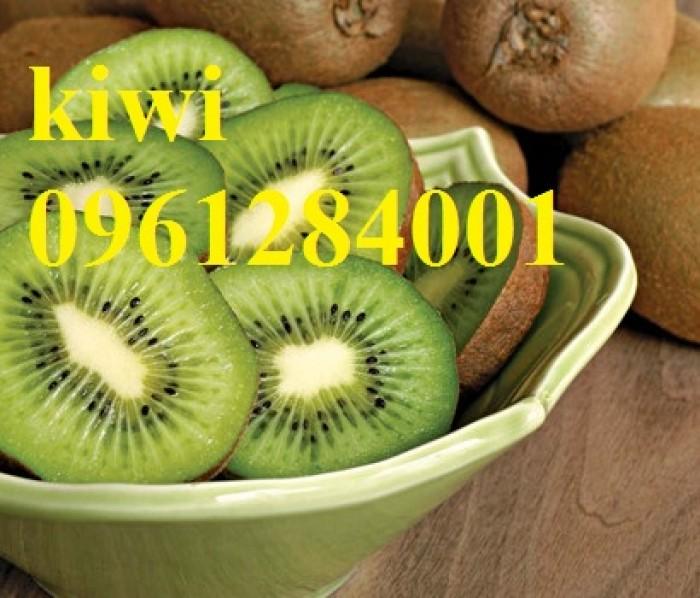 Bán cây giống kiwi, kiwi ruột xanh, kiwi ruột vàng, cây kiwi11