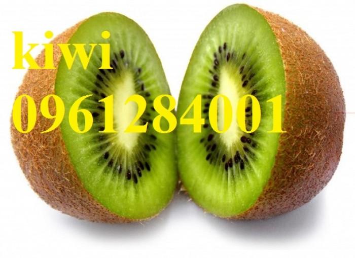Bán cây giống kiwi, kiwi ruột xanh, kiwi ruột vàng, cây kiwi10