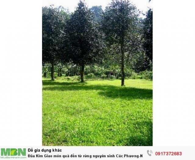 Đũa Kim Giao món quà đến từ rừng nguyên sinh Cúc Phương-Ninh Bình1