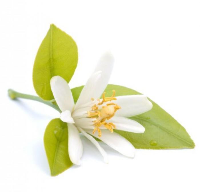 Tinh dầu hoa cam plus 20ml – Neroli EO nguyên chất thiên nhiên Ấn Độ – Thơm lạ, dễ chịu1