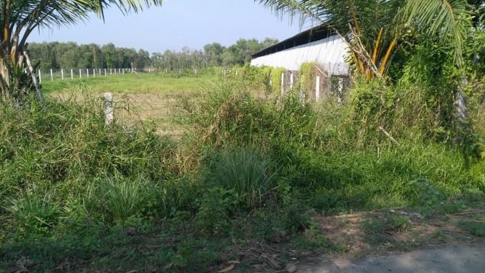 Bán nền đất ngay mặt tiền đường Cây Trôm Mỹ Khánh – Tỉnh Lộ 7 xã Thái Mỹ.