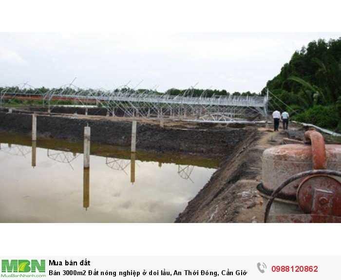 Bán 3000m2 đất nông nghiệp 1 tỷ 650 triệu ở doi lầu, An Thới Đông, Cần Giờ TPHCM