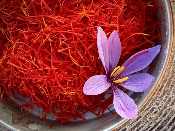 Tìm đại lý phân phối nhụy hoa nghệ tây saffron chiết khấu cực tốt0