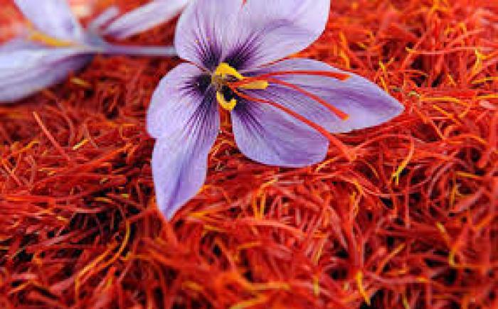 Tìm đại lý phân phối nhụy hoa nghệ tây saffron chiết khấu cực tốt1