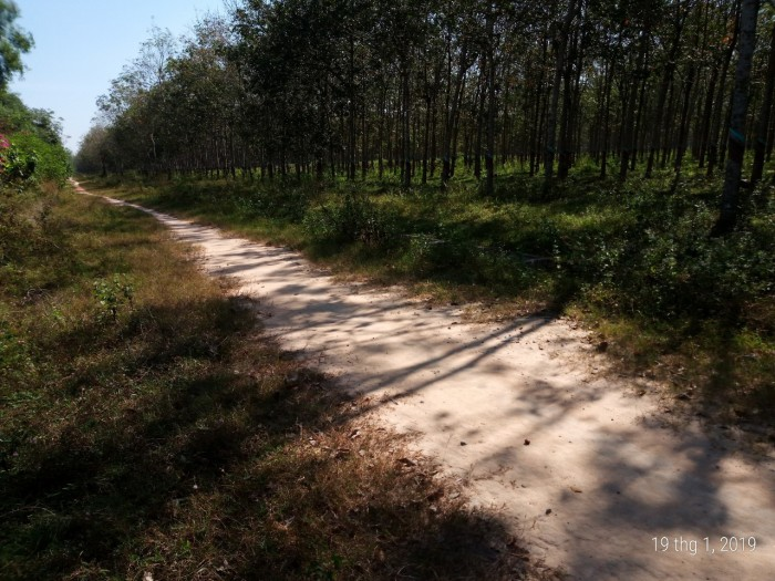 Đất Thổ Cư 10m X 24m Ấp 3 Xã Phạm Văn Cội,Củ Chi