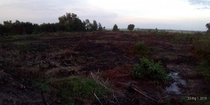 Đất Vườn 77m X 85m Đường Đất Đỏ  Ấp Bình Thượng  Thuộc Xã Thái Mỹ Huyện Củ Chi.