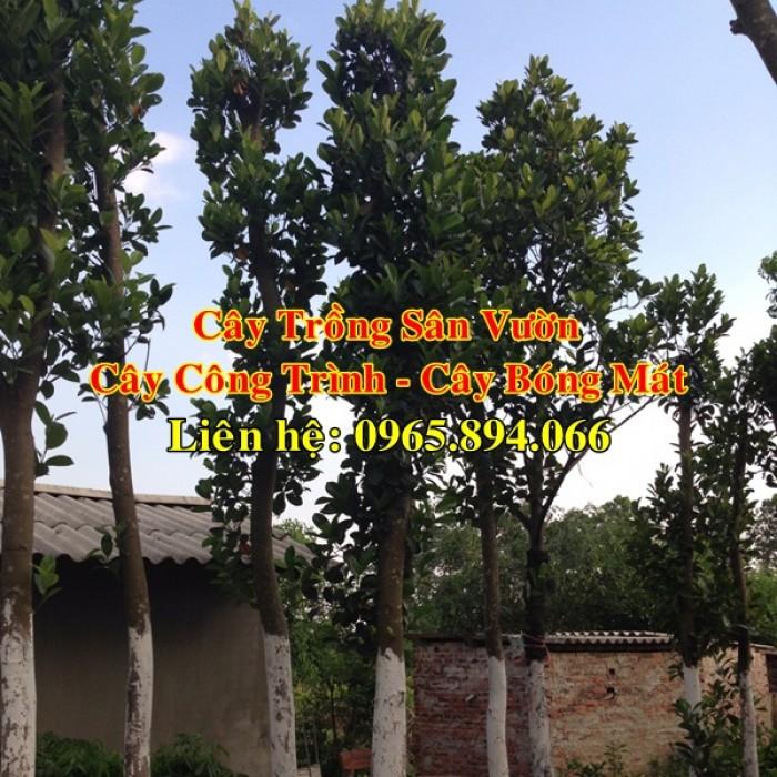 Cung cấp cây mít công trình, mít công trình, cây mít cổ thụ, cây mít trồng sân vườn5