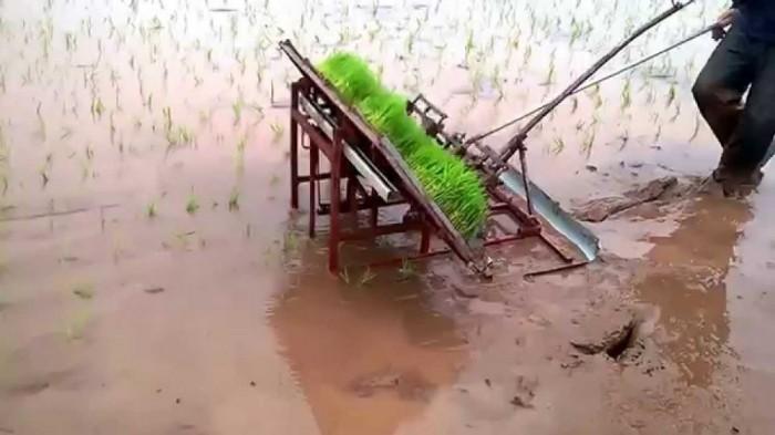 Máy cấy lúa mạ sân 4 hàng kéo tay thủ công mua ở đâu tại Nam Định giá rẻ nhất1