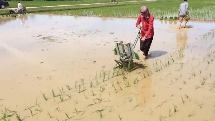 Địa chỉ tại Hà Nội chuyên phân phối máy cấy lúa mạ nhổ 2 hàng đẩy tay chất lượng cao giá rẻ nhất thị trường2