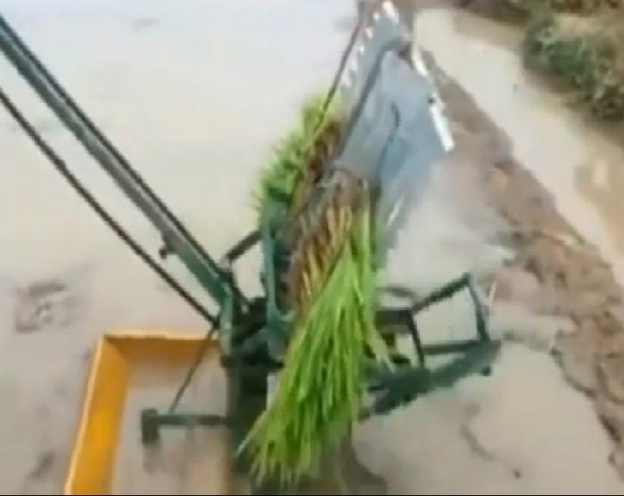 Địa chỉ tại Hà Nội chuyên phân phối máy cấy lúa mạ nhổ 2 hàng đẩy tay chất lượng cao giá rẻ nhất thị trường1