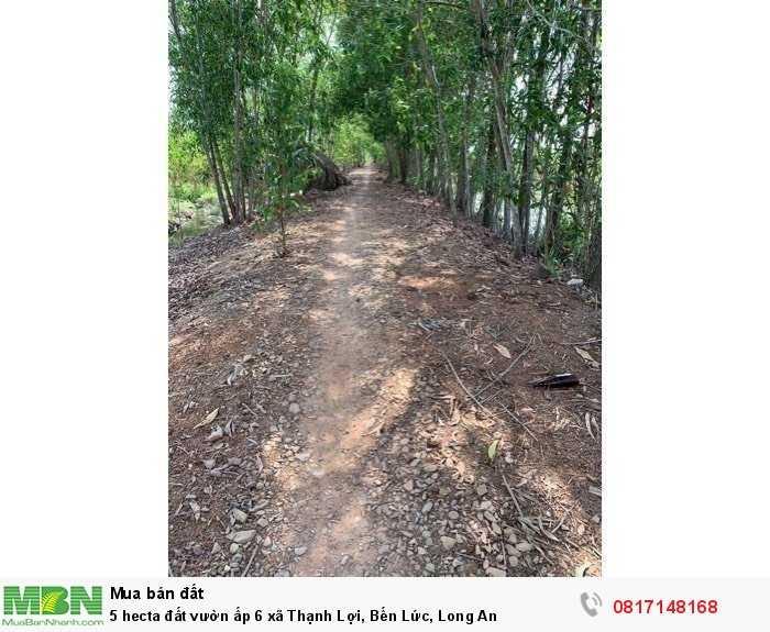 5 hecta đất vườn ấp 6 xã Thạnh Lợi, Bến Lức, Long An