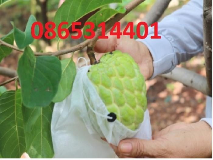 Cung cấp giống cây na Thái Lan quả to khủng 1kg 1 quả. cây trồng tiềm năng lớn6